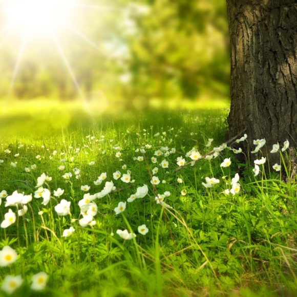 Hladík: Při údržbě zeleně je nejdůležitější přizpůsobit se klimatickým podmínkám