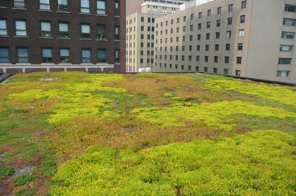 Dotační program na tvorbu zelených střech je teprve začátek. Brno bojuje s klimatickou změnou a suchem.