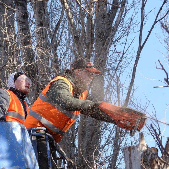 Brno chrání návštěvníky Ústředního hřbitova před nebezpečnými stromy