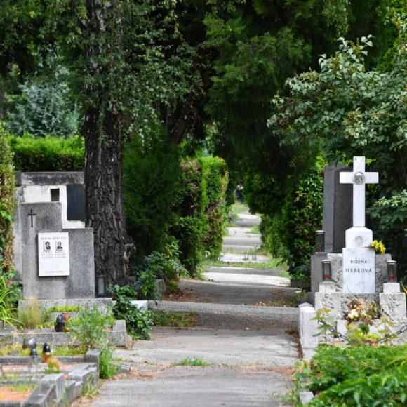 Cesty na Ústředním hřbitově budou zadržovat srážkovou vodu